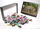 Photo Jigsaw Puzzle of Jaguar