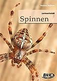 Lernwerkstatt Spinnen