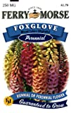 Ferry-Morse Perennial Flower Seeds 1052 Foxglove - Mixed Colors 250 Milligram Packet