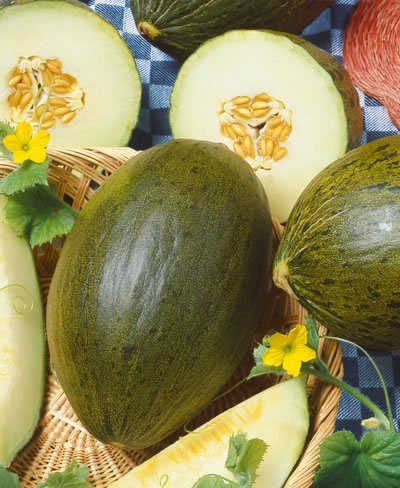 Lambkin Hybrid Christmas Melon Seeds - Cucumis Melo - 0.25 Grams - Approx 12 Gardening Seeds - Vegetable Garden Seed