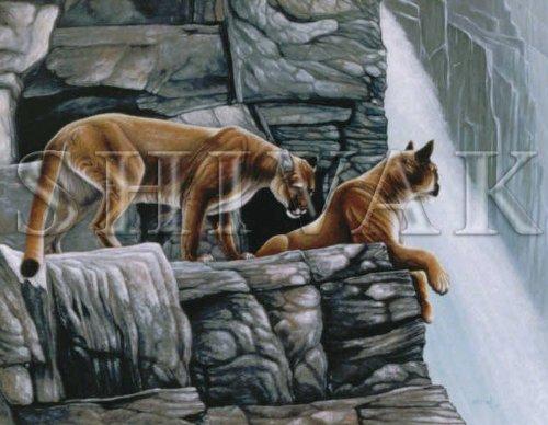 Original Mountain Lion Painting by Shivak