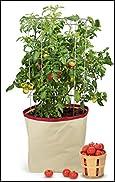 Homegrown Gourmet Tomato Harvest Grow Bag