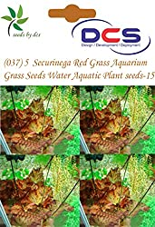 DCS(037) 5 Securinega Red Grass Aquarium Grass Seeds Water Aquatic Plant Seeds-16