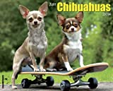 Just Chihuahuas 2014 Wall Calendar