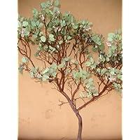 Manzanita Branches 37