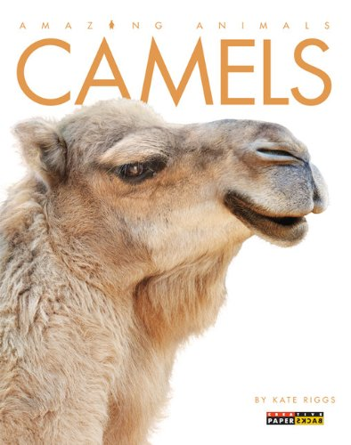 Amazing Animals: Camels