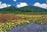 300ピース 浅間山と花畑-長野 25-086S