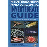 Mediterranean and Atlantic Invertebrate Guide: From Spain to Turkey, from Norway to the Equatorby P? Wirtz