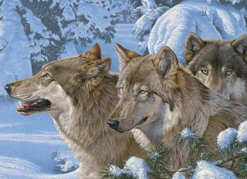 Cheap Outset Media Wolves of Winter Jigsaw Puzzle 1000 Piece By Cobble Hill (B005EGROEU)