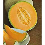 CANTALOUPE SEED?, HALES BEST JUMBO, HEIRLOOM, ORGANIC, NON GMO, 25+ SEEDS, MELON