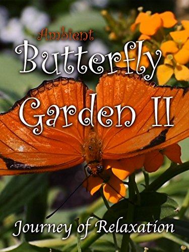 Ambient Butterfly Garden II