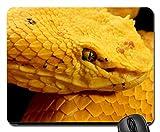 Eyelash Viper Mouse Pad, Mousepad (Reptiles Mouse Pad)