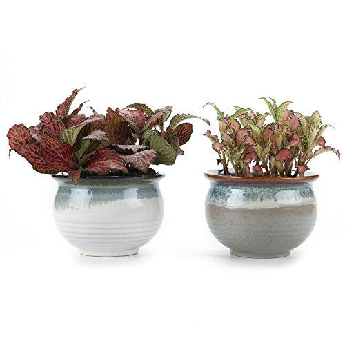 t4u-9cm-ceramic-flowering-glaze-whitegrey-set-sucuulent-plant-pot-cactus-plant-pot-flower-pot-contai