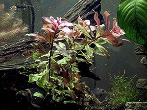 pet supplies fish aquatic pets aquarium decor plastic plants