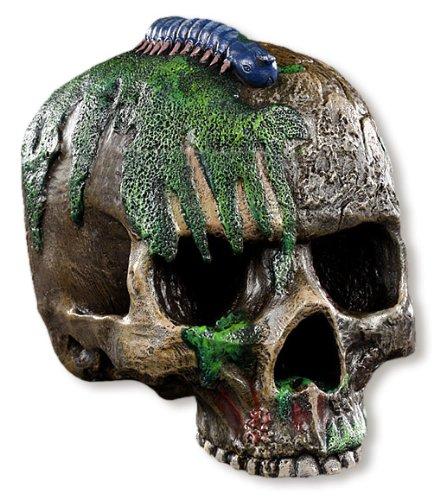 Scavi cranio