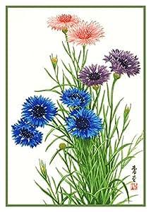 Tanigami Konan Asian Blue Cornflower Flowers