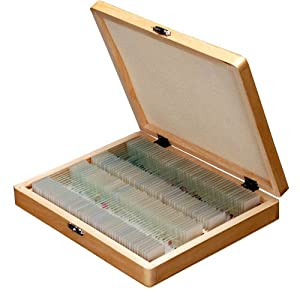 AmScope 100pc Home School Student Basic Biology Science Prepared Slides Microscope Slides in Wooden Box Case (Set A)