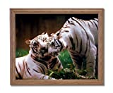 Pair Of White Tigers Hugging In Wild Home Decor Wall Picture Oak Framed Art Print
