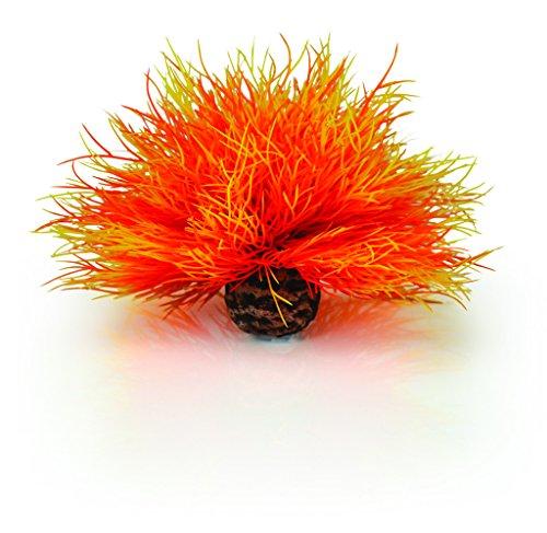 biOrb-Flame-Sea-Lily-Plante-dAquarium