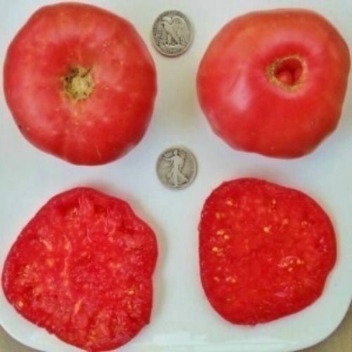 Radiator Charlie's Mortgage Lifter - Organic Heirloom Tomato Seeds - 40 Seeds (Tomato Seeds Mortgage Lifter compare prices)