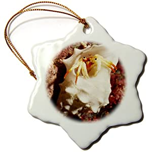 3dRose orn_45884_1 Small White Hermit Crab Makes its Home in an Empty Shell That is Much to Large for it Snowflake Porcelain Ornament, 3-Inch
