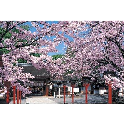 yanoman-puzzle-1000-pieces-allee-bordee-darbre-en-fleurs
