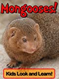 Mongooses! Learn About Mongooses and Enjoy Colorful Pictures - Look and Learn! (50+ Photos of Mongooses) (English Edition)