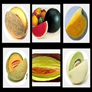 Survival Fruit Seeds Only $21.99 Non Hybrid NO GMO Real Survival Seeds Each variety of our Non Hybrid, Heirloom, Non GMO Seeds are package in a labeled paper envelope, (not a Ziploc or Poly bag) and Heat Sealed in a resealable Mylar Bag, like the Mylar Bag that The Svalbard Global Seed Vault use for storing their seeds. Planting and Harvesting Instructions for each seed is Included. Plus as a Bonus, a Step by Step Instructions guide on how to collect new viable seeds from your plants, thus providing a NEVER ending food supply of Non-Hybrid, Heirloom,NON GMO first quality seeds for generations to come!!!