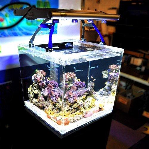 schuber wright titan aquarium hqi fixture plus 8 actinic
