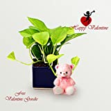 Exotic Green Indoor Plant Golden Pothose Valentine Day Special in Blue Pot