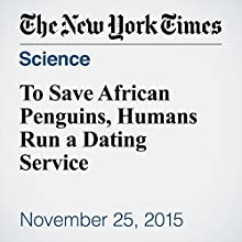 To Save African Penguins, Humans Run a Dating Service (       UNABRIDGED) by Christina Cooke Narrated by Fleet Cooper
