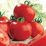 Suttons Seeds 180850 Tomato Ailsa Craig Seed