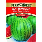 Ferry-Morse 1928 Watermelon Seeds, Ultra Cool Hybrid (400 Milligram Packet)
