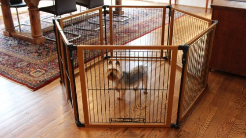 Cardinal Gates Perfect Fit Pet Gate