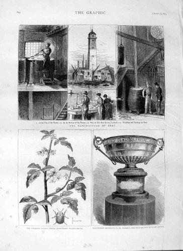 old-original-antique-victorian-print-1875-manufacture-shot-weapons-potato-beetle-rugy-cup-244m111