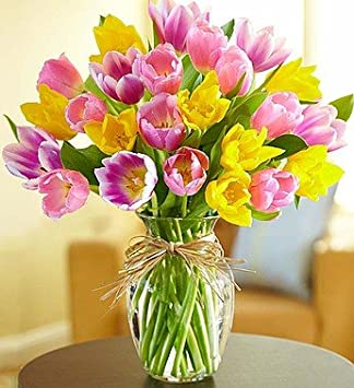 Amazon.com : 1-800-Flowers - Timeless Tulips - Large : Grocery ...