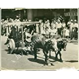 Vintage Photo- Man & ox cart at Santa Barbara Fiesta
