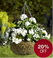 Contemporary Moss Lined Hanging Basket