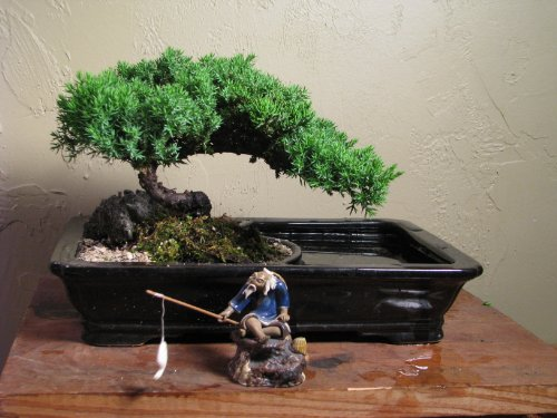 Bonsai Pots A Juniper Bonsai Tree In A Land Water Pot A Beautiful Scene From Abonsaiforyou