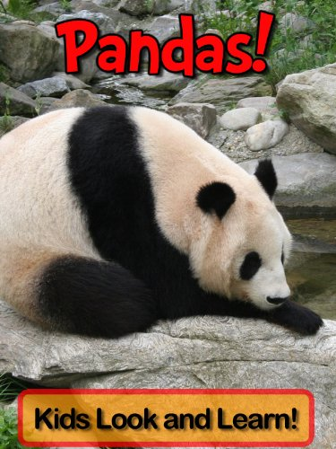 pandas-learn-about-pandas-and-enjoy-colorful-pictures-look-and-learn-50-photos-of-pandas-english-edi