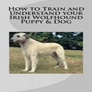 How to Train and Understand Your Irish Wolfhound Puppy & Dog | [Vince Stead]