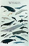 Whales-Poster-Posters