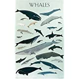 Whales, Poster