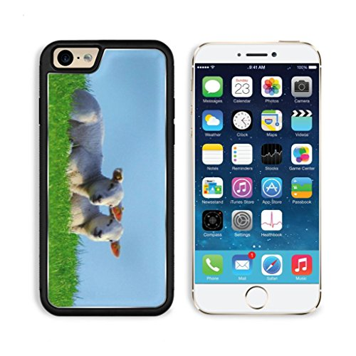Baby Sheep Mutton Prairie Animals Apple Iphone 6 Tpu Snap Cover Premium Aluminium Design Back Plate Case Customized Made To Order Support Ready Luxlady Iphone_6 Professional Case Touch Accessories Graphic Covers Designed Model Sleeve Hd Template Wallpaper front-1030675