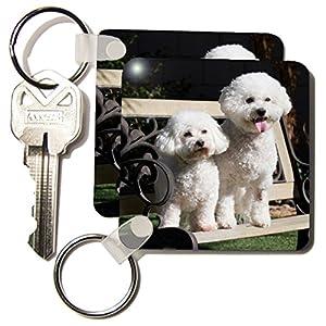 3dRose Two Bishon Frise dog - US05 ZMU0060 - Zandria Muench Beraldo