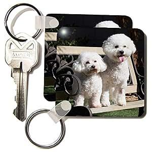 Amazon.com: 3dRose Two Bishon Frise dog - US05 ZMU0060 - Zandria