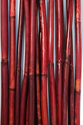 Green Floral Crafts Natural River Cane 6 Ft, Red, Pack of 20