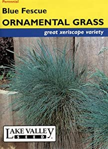 Lake Valley 441 Ornamental Grass Blue Fescue Seed Packet