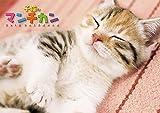 子猫のマンチカン 2015年カレンダー 15CL-372