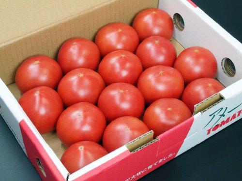静岡県産 トマト アメーラ フルーツトマト 秀品 (12~20玉)